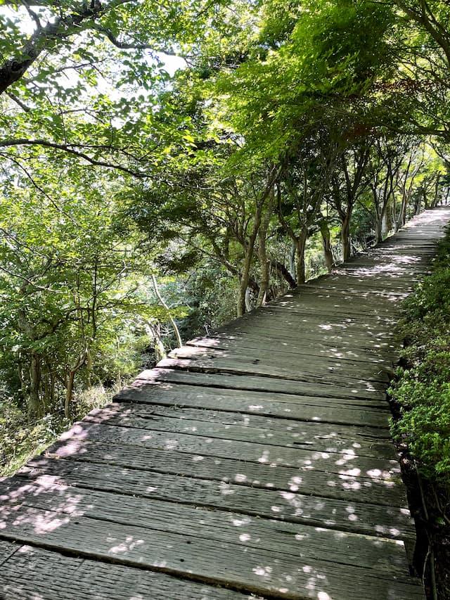 伊豆の国パノラマパークのボードウォーク 夏の景色
